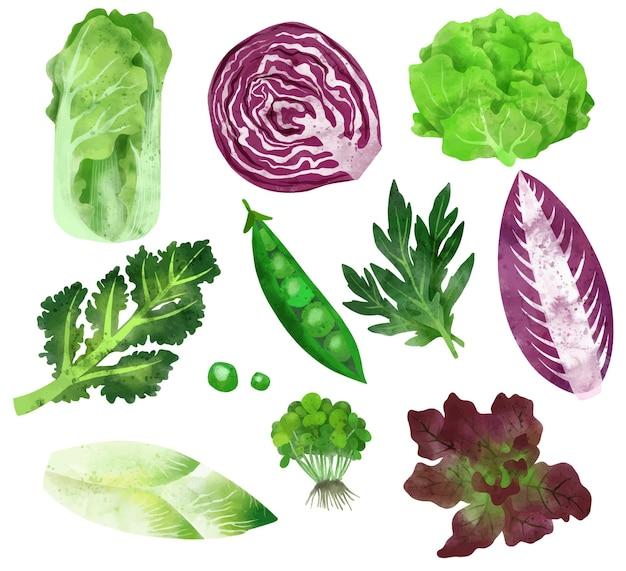 Verdure disegnate a mano