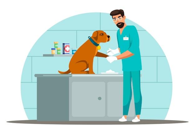 Scena di lavori specialistici veterinari