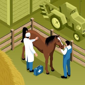 Veterinario in un'illustrazione isometrica del ranch