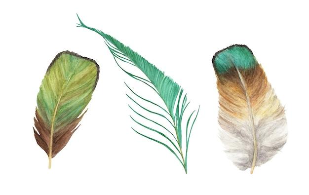 Set di piume vibranti. illustrazione dell'acquerello.