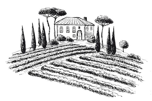 Paesaggio della piantagione di vite illustrazione vettoriale disegnata a mano