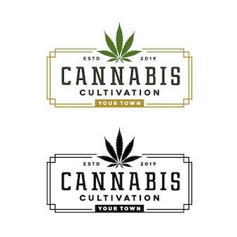Vintage cannabis marijuana canapa rettangolo timbro etichetta logo design