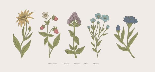 Illustrazione botanica disegnata a mano d'epoca piante scientifiche fiori ed erbe naturali isolate