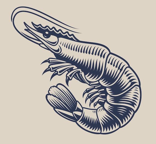 Illustrazione d'epoca un gambero per il tema dei frutti di mare su uno sfondo bianco.