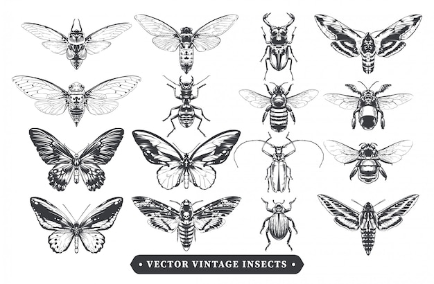Collezione di insetti vintage
