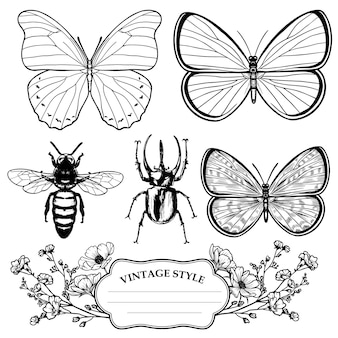 Collezione di insetti contorno vittoriano vintage
