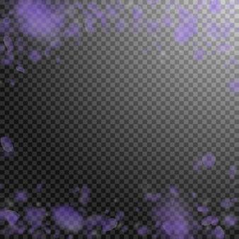 Petali di fiori viola che cadono. preziosi fiori romantici che cadono sotto la pioggia. petalo volante su sfondo quadrato trasparente. amore, concetto di romanticismo. bellissimo invito a nozze.