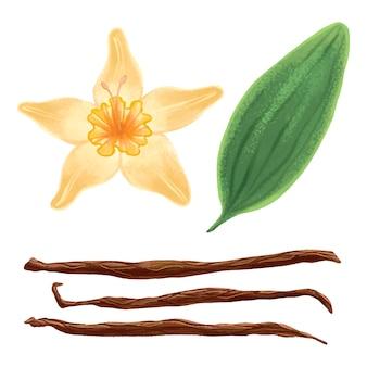 Illustrazione vivida di fiori di vaniglia, bastoncini di vaniglia e set di foglie di vaniglia