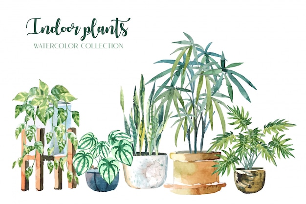 Le piante d'appartamento di colore di acqua (pothos, snake plant, peperomia, lady palm e xanadu) hanno messo sull'illustrazione bianca del fondo Vettore Premium