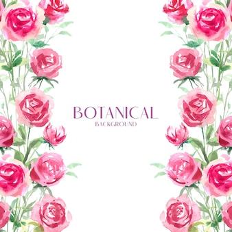 Acquerello rosa rossa botanica, rosa e bianca