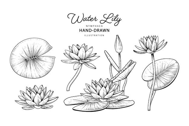 Disegni di elementi di fiori di ninfea.