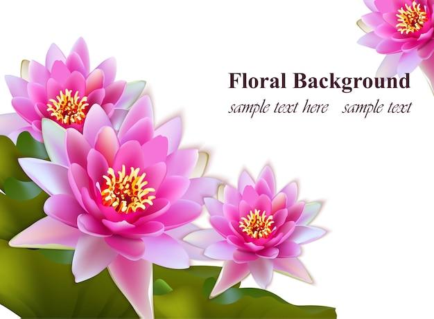 Giglio di acqua fiori realistici su sfondo bianco