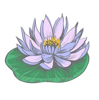 Ninfea. loto. contorno disegnato a mano