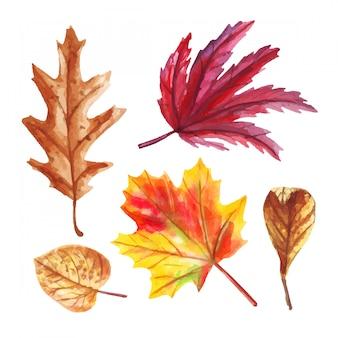 Foglie cadute di autunno dell'acquerello isolate su bianco