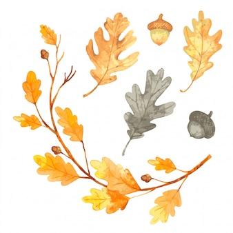 Set di foglie autunnali dell'acquerello. illustrazione