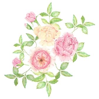 Acquerello bella rosa inglese bouquet di fiori isolato