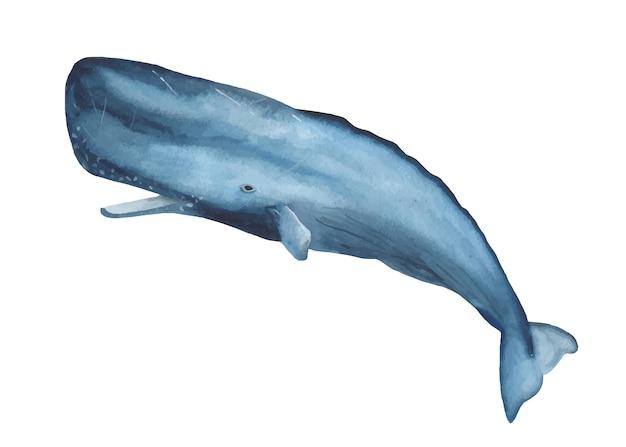 Clipart blu dell'acquerello del capodoglio