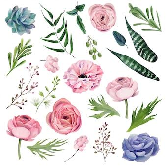Elementi botanici dell'acquerello, illustrazione disegnata a mano