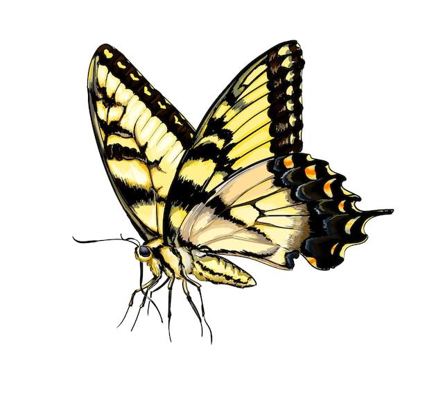 Farfalla dell'acquerello su bianco