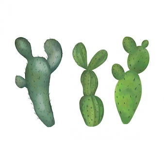 Collezione di cactus ad acquerello