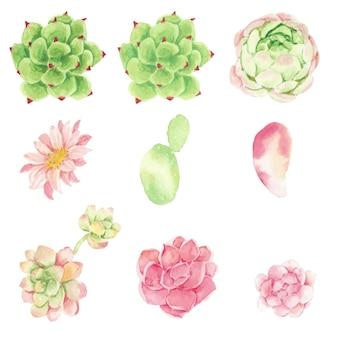 Cactus dell'acquerello e raccolta di elementi succulenti isolata