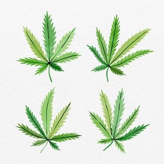 Collezione di foglie di cannabis dell'acquerello