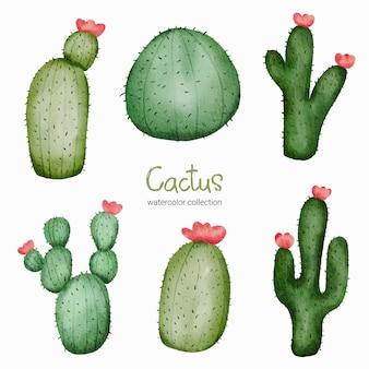 Giocattolo del gatto dell'acquerello. set di giocattoli per bambini di piante di cactus