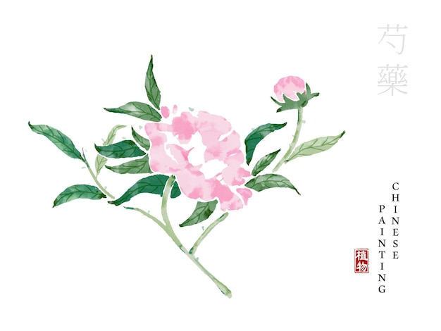Pianta della natura dell'illustrazione di arte della pittura dell'inchiostro cinese dell'acquerello dalla peonia del libro dei canti.