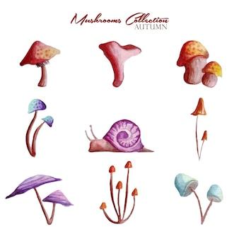 Collezione di acquerelli di 5 tipi di funghi e lumaca