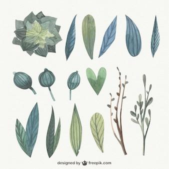 Acquerello carino foglie pacco