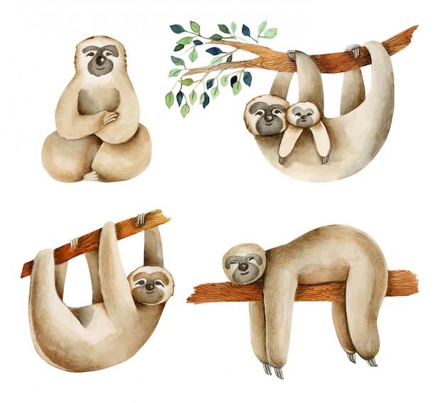 Illustrazione sveglia di bradipi dell'acquerello, disegnata a mano