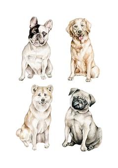 Collezione di cani dell'acquerello