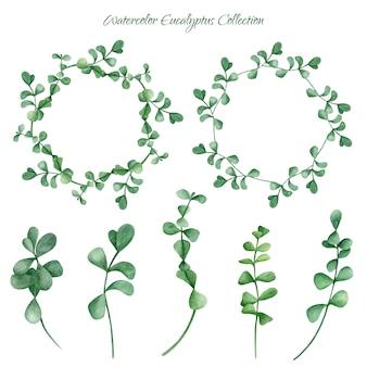 Collezione di eucalipti dell'acquerello con ramoscelli e ghirlande