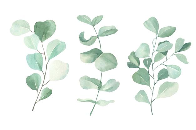 Collezione di eucalipti dell'acquerello.