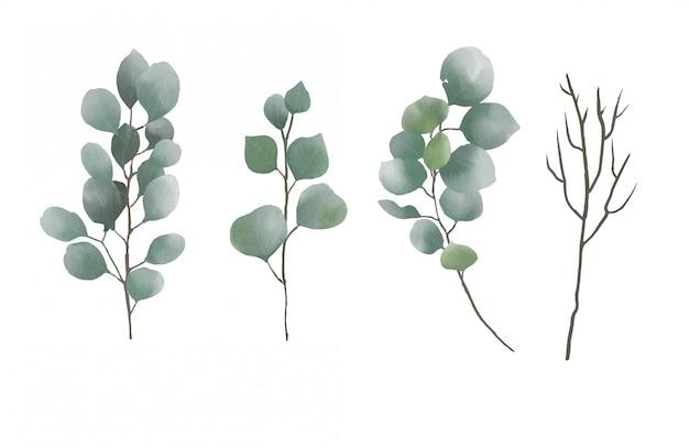 Collezione di foglie di eucalipto dell'acquerello