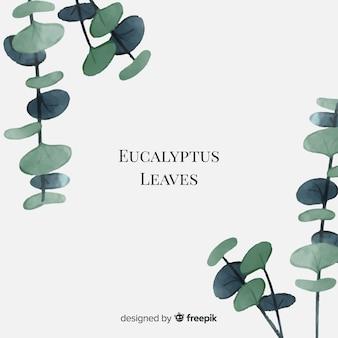 Foglie di eucalipto acquerello