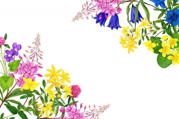 Fiori di campo dell'acquerello, colori vivaci, cornice ad angolo