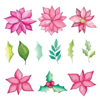 Elementi floreali dell'acquerello, fiori di poinsettia, bacche, foglie, rami di abete