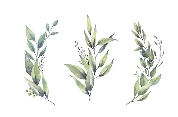 Mazzi di foglie verdi floreali dell'acquerello.
