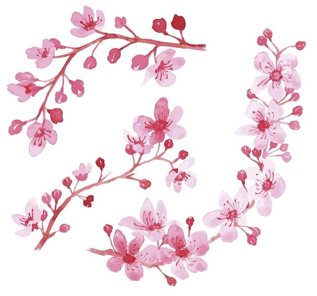 Illustrazione floreale dell'acquerello