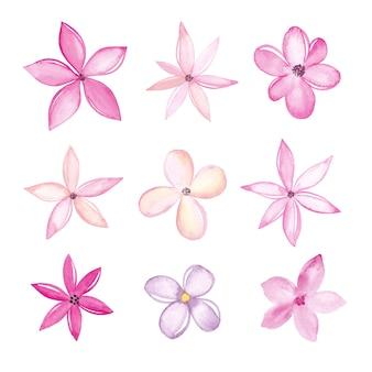 Raccolta di fiori dell'acquerello isolato su priorità bassa bianca