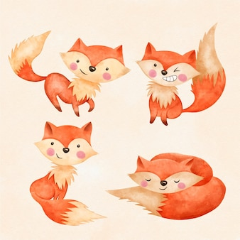 Collezione di volpi dell'acquerello