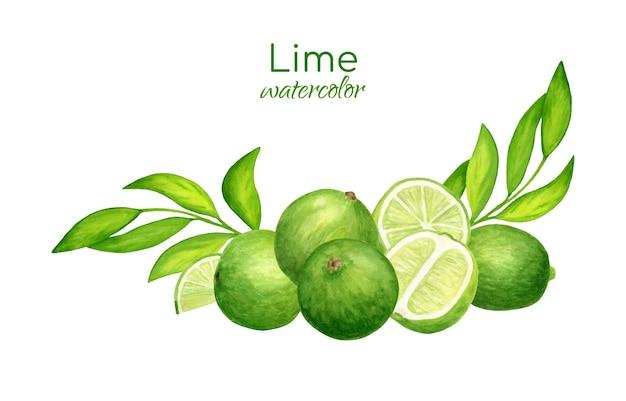 Disposizione di lime e foglie fresche dell'acquerello