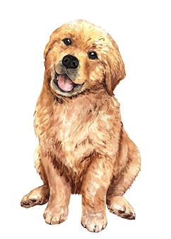 Illustrazione dell'acquerello del golden retriever