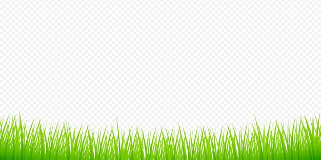 Illustrazione dell'acquerello verde