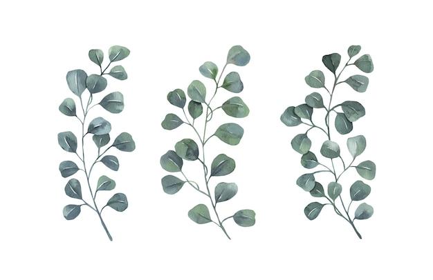 Collezione di foglie verdi dell'acquerello