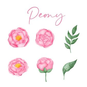 Peonia di primavera disegnata a mano dell'acquerello