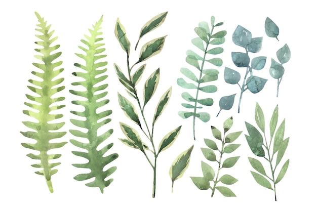 Insieme di rami e foglie dipinti a mano dell'acquerello.