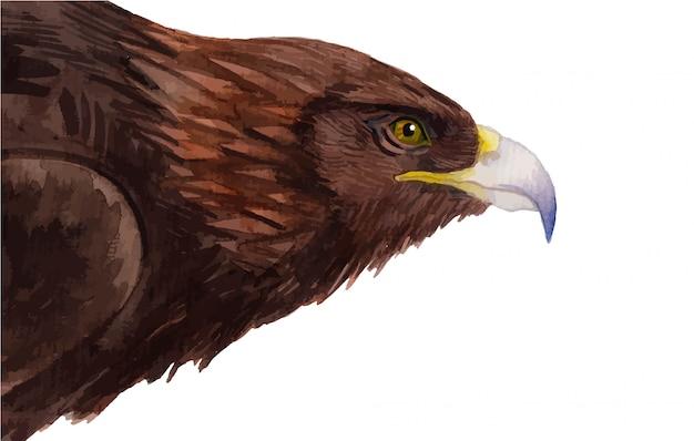 Illustrazione del ritratto dell'aquila dipinta a mano dell'acquerello