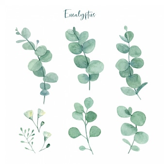 Foglie di eucalipto verde dipinto a mano dell'acquerello con boccioli di fiori